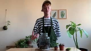 DIY Corked Jar Terrarium Kit - Online class