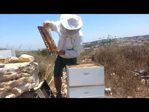 пчеловодство . результат установки квебек