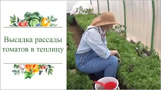 Высадка рассады томатов в сидераты видео