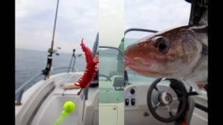 Рыбалка в новороссийске и его окрестностях
