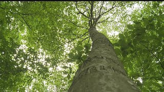 Conservation-focused tree farm in Columbiana Co. wins state award for best of the year