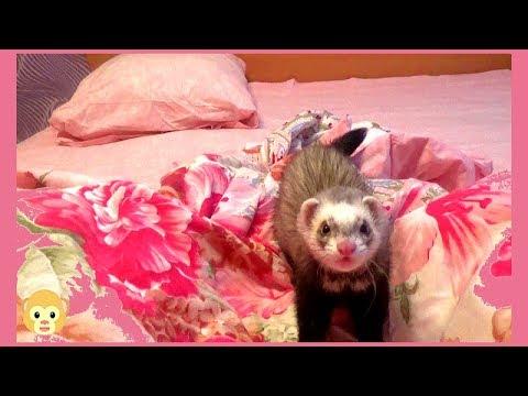 , title : 'Кузя играет на кроватке!!! Животные приколы!!! Животные смешные!!! Приколы с животными!!!'