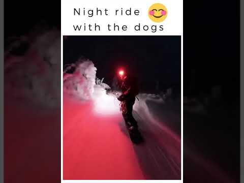 Night ride with the dogs