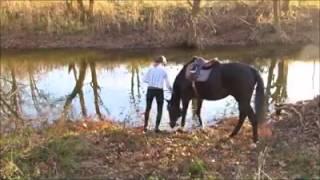 Este cavalo não queria entrar na agua, até descobrir o quanto era bom