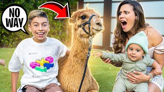 SURPRISING our KIDS With Their DREAM PET! (Emotional) | The Royalty Family