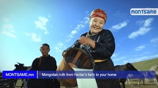 Mongolian milk from herder's farm to your home