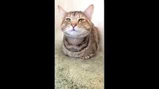 preview picture of video 'Delaware Humane Association: Cat Village Visit'