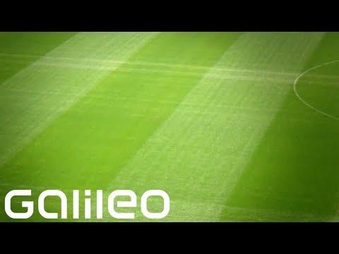 Weg des Fußballrasens | Galileo