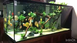 Cá Đĩa Đẹp Nhất Hà Nội