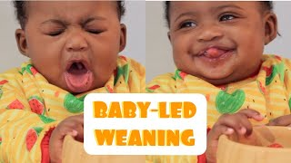 STARTING FINGER FOODS FOR 4 - 6 MONTH OLD BABIES WITH NO TEETH