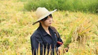 【二米炊烟】丰收的季节,来几道下酒菜,稻花鱼红烧肉,犒劳下家人