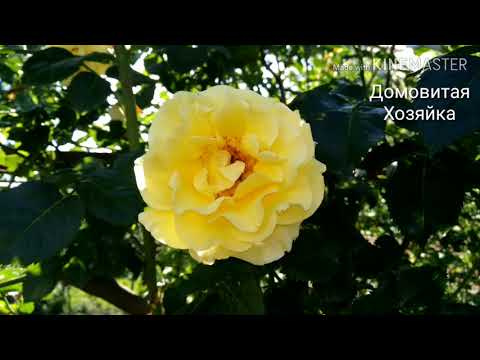 Лето Ёжик Розы Природа 🌼Цветы