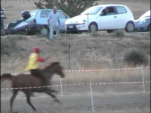 Quale effetto di attivatore di cavallo