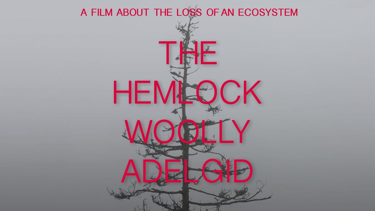 [TRAILER ONLY] Hemlock Woolly Adelgid