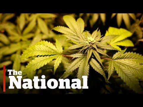 Marijuana and education