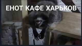 КАФЕ С ЖИВЫМИ ЕНОТАМИ. Харьков 2019