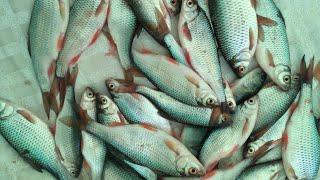 Последний отчеты о рыбалке в подмосковье