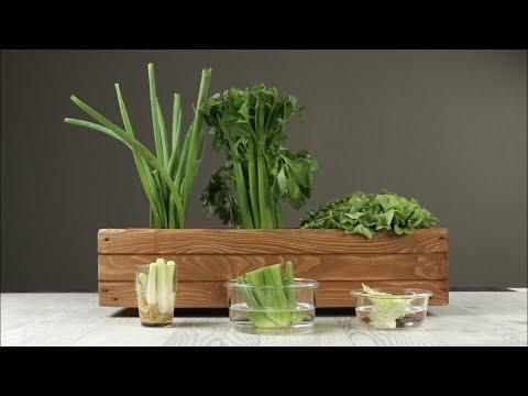 Verdure fresche dai rifiuti della cucina!
