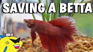 SAVING A BETTA FISH! - Proper Betta Tank Setup