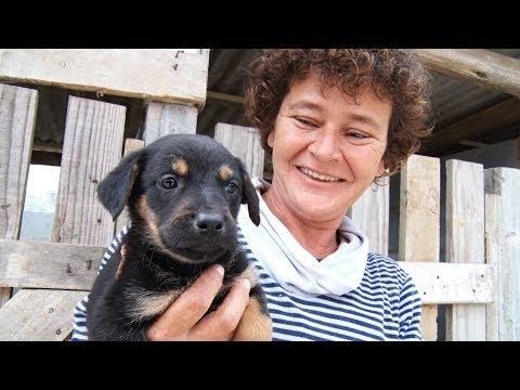 Conheça a história da protetora que cuida de 380 cães em Nova Friburgo