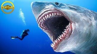 ทำไมเจ้าฉลามยักษ์ Megalodon ถึงสูญพันธุ์ ? (เเปลกมาก)