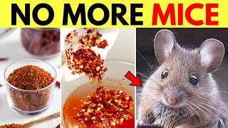 Get Rid Of Mice in Apartment Walls and Ceiling and Kitchen Cabinets Naturally Without Killing Them