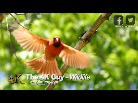 The 4K Guy: Wildlife Video Compilation - Ontario, Canada