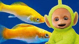 Animal Compilation - Best Teletubbies Animal Episodes