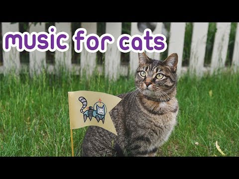 Cat Music: Peaceful music to soothe and relax your Cat!