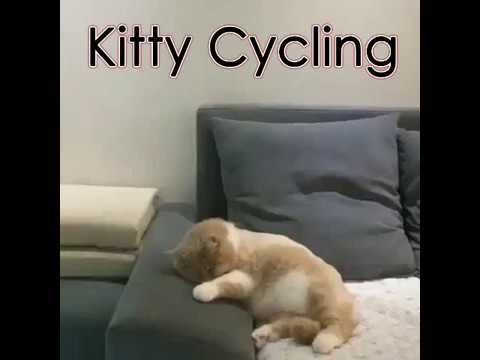 Adorable Cat Dreaming it's Riding a Bicycle and Crashing