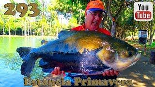 Programa Fishingtur na TV 293 - Estância Primavera