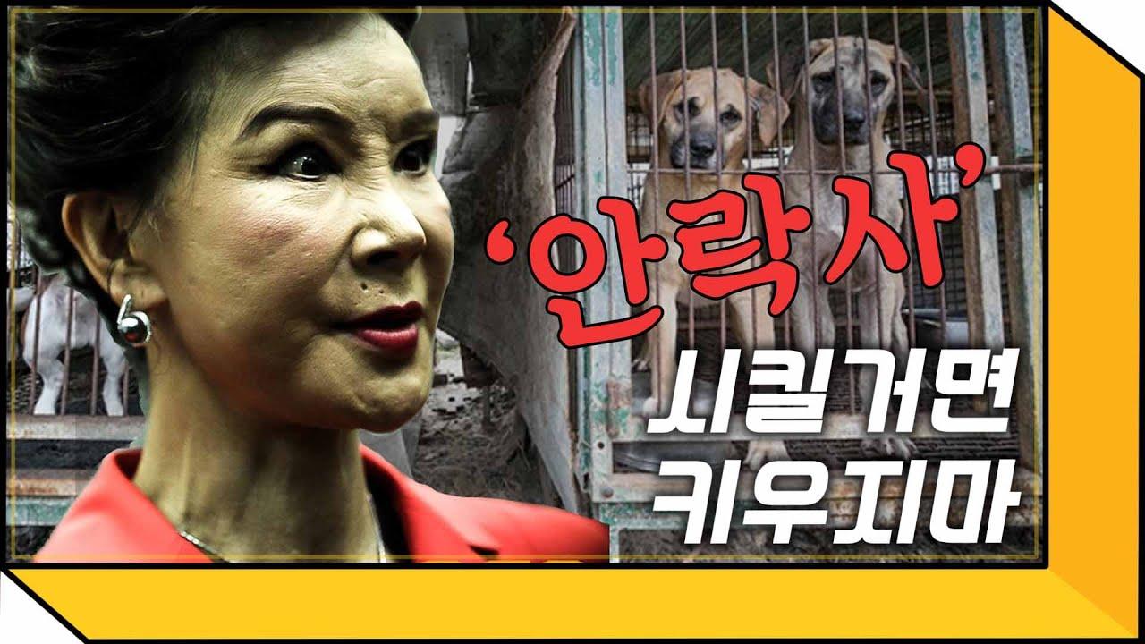 입양 1500마리 유기견 대모 배우 이용녀의 犬하루