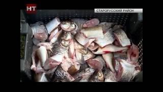 В деревне Взвад Старорусского района прошел День рыбака