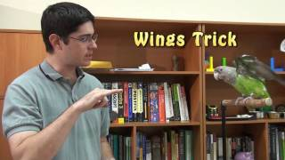 Truman Cape Parrot - Wings Trick Preview