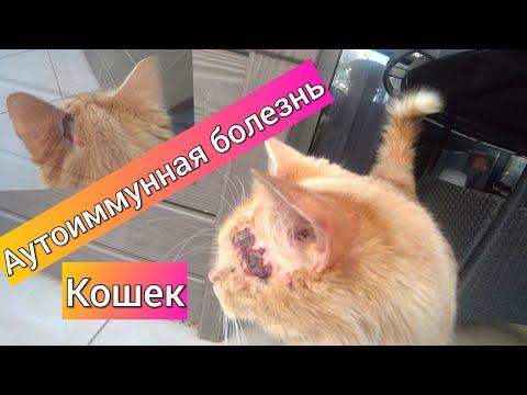 Все плохо! Человеческая болезнь кошек