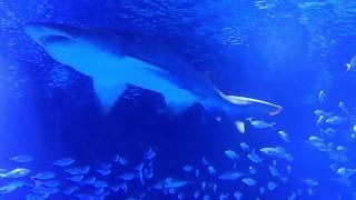 Valencia Aquarium: L'Oceanografic