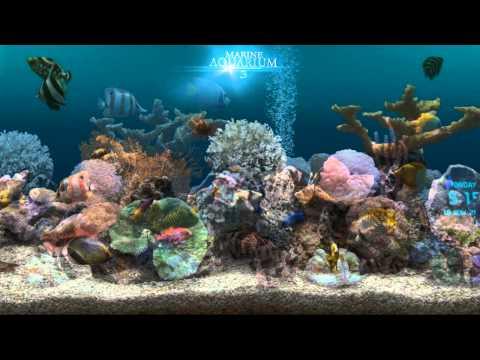 Video of Marine Aquarium 3.2