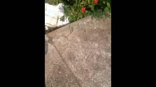 Phát hiện rắn lục chui vào nhà