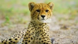 Ultimate Wild Animals & Nature Show   Amazing Wildlife Videos.