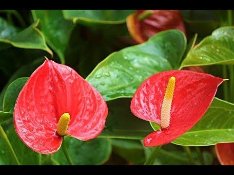 Комнатные цветы в доме? Какие выбрать домашние цветы?