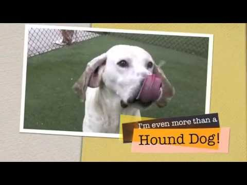 Treagle is One Terrific Hound!