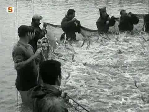 Pesca in 3.1 codici