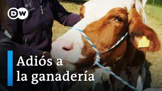 La ganadería en entredicho: salvar animales del matadero   DW Documental
