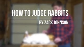 Another School Project: How to Judge Rabbits