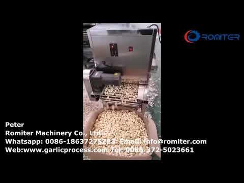 Máquina peladora de ajo tipo cadena de 300 kgh