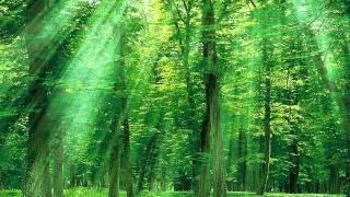 癒し系自然音森林浴YouTube2
