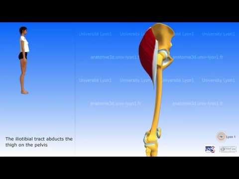 Trening w domu dla mięśni brzucha