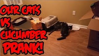 Cats Vs Cucumber Prank GONE HORRIBLY WRONG!