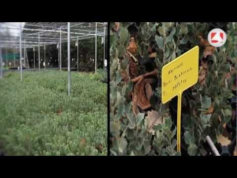 Producci n de plantas y rboles en el vivero de el for Produccion de plantas en vivero pdf