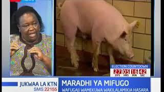Wafugaji walalama kuhusu ugonjwa wa mifugo wa miguu na mdomo: Jukwaa la KTN pt 2